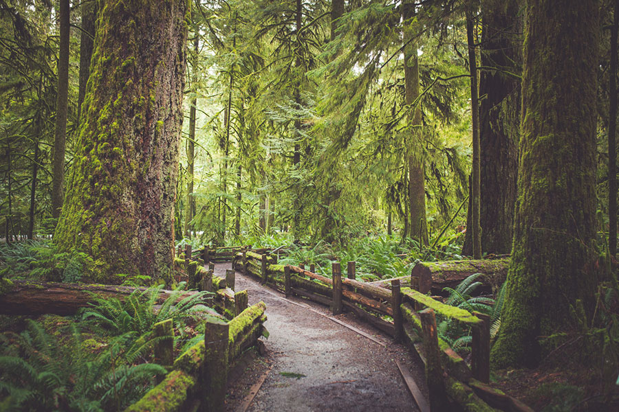 craverealestate-adventure-in-nature-cathedral-grove